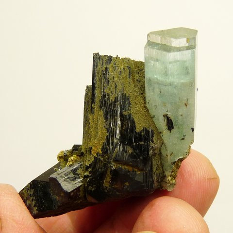 Aquamarine crystal with gemmy termination on schorl crystal matrix